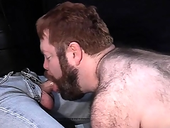 Big hairy ladies' loves to be leashed river-bed on a snare increased by suck hard cock
